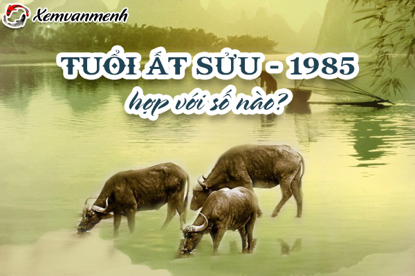 1985-tuoi-at-suu-hop-voi-so-nao